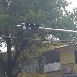 semaforo neto control-5